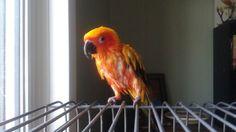 Bird bath Parrot, Bath, Parrot Bird, Bathing, Bathtub, Parrots, Bath Tub, Bathroom, Bathrooms