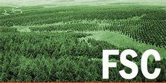 FSC - Cerca amb Google