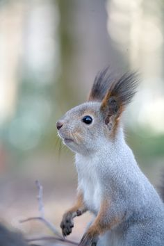 A Squirrel by Gleb Skrebets