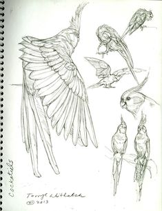 Little Theropods All Around Us -By Terryl Whitlatch – Cockatiel Bird Drawings, Animal Drawings, Pencil Drawings, Drawing Birds, Animal Sketches, Drawing Sketches, Sketching, Terryl Whitlatch, Tattoo Symbole