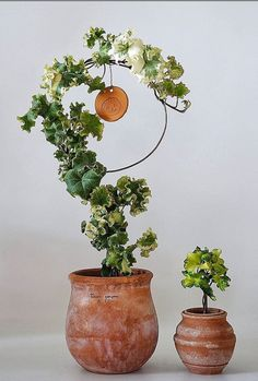 hedera helix golden curl I thought both of you would like this :) mom House Plants Decor, Plant Decor, Planting Succulents, Planting Flowers, Indoor Plants, Indoor Garden, Amaryllis, Plant Aesthetic, Green Plants