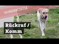 Hund Freilauf ohne Leine beibringen   Befehl Steh / Warte   Hundekanal Hundetraining - YouTube