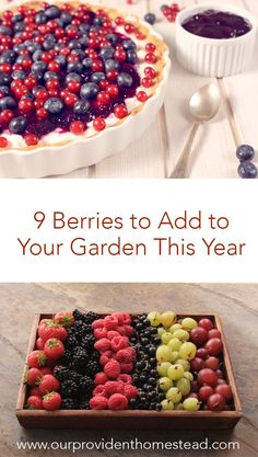 Do you want to sweeten up your garden this year? Click here to see the 9 berries to add to your garden. Your sweet tooth will thank you! #garden #gardening #growingberries #growingfruit #gardeningtips via @ourprovidenthom