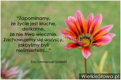 Zapominamy, że życie jest kruche, delikatne... #Schmitt-EricEmmanuel,  #Śmierć, #Życie