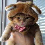 これはニャンだ?きぐるみをかぶったネコの写真集