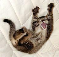 Lustige Tiere mehr auf http://www.fails.ch waking -