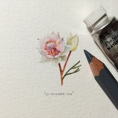 Miniature Painting Project by Lorraine Loots, South Africa Watercolor Flowers, Watercolor Paintings, Watercolors, Lorraine, Protea Flower, South African Artists, Mini Paintings, Miniature Paintings, All Nature