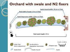 Swale Plan view
