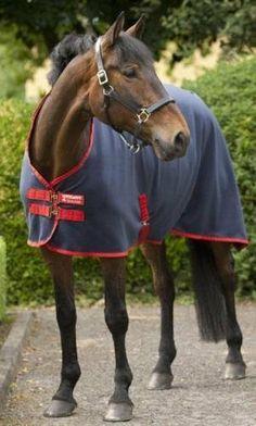 """Horseware Ireland - Amigo Mio Fleec Cool H Sur - Navy-Red-816'9"""" by Horseware. $32.40. Horseware Ireland - Amigo Mio Fleec Cool H Sur - Navy-Red-816'9"""". Save 10% Off!"""