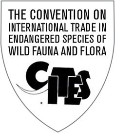 #ThrowbackThrusday. At the 8th IUCN Congress, held in Kenya in 1963, delegates began calling for the creation of an international convention to regulate trade of rare or threatened species to ensure that international trade of wild animals and plants did not threaten their survival. IUCN took the lead in drafting the convention and circulated an initial draft of the proposed convention 1964. Subsequent drafts were circulated to all members of the United Nations in 1967, 1969 and 1971.
