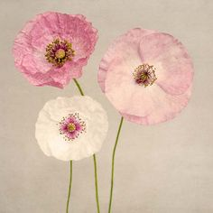 "Poppy Art, Fine Art Flower Photography Print """"Pink Poppies No. 2"""""