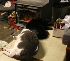 some of our hard working cats at the Stearnsy Teddy Bear Shop.