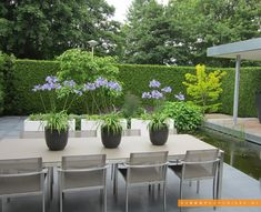 grey contemporary pots of agapanthus || Tuininspiratie - De Rooy Hoveniers