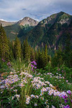 Flowers Roadside ~ San Juan Mountains, Colorado