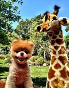 boo + giraffe