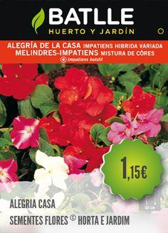 Alegria da Casa - PLANTAR PORTUGAL