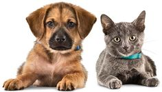Weekend Sale Stock Up and Save on Essentials at PetSmart.com! - Coupons, Free Printable Coupons, Discount Deals