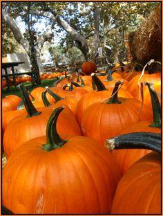 Pumpkin Patch fun in Irvine