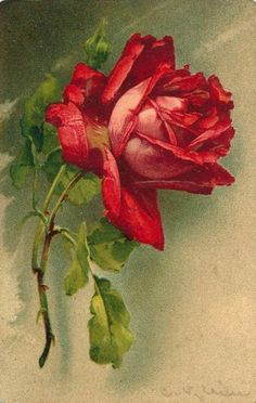 Artist Catherine Klein ~ Red Rose by zori' Catherine Klein, Art Floral, Photo Rose, Vintage Flowers, Vintage Prints, Vintage Art, Flower Art, Red Roses, Red Flowers