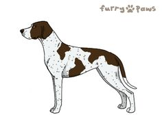 Furry Paws // GCT Sunlight [Lla 2STM 9HH 1.030] *BoB*'s Kennel