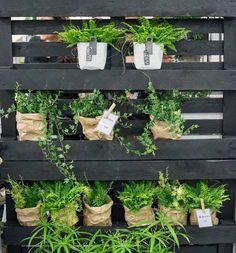 Messupoimintoja Plants, Plant, Planets