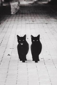 ieri, 17 novembre 2013, si è celebrata la nona giornata nazionale del gatto nero  http://www.ansa.it/web/notizie/canali/energiaeambiente/natura/2013/11/17/Giornata-gatto-nero-volontari-baffi-_9635115.html