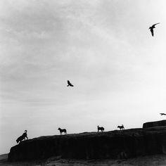 © Graciela Iturbide - Lost dogs, India 1997
