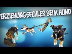 Die größten Fehler in der Hundeerziehung! Hund richtig erziehen! Tipps!! - YouTube