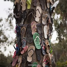Tree of thongs Echuca Australia