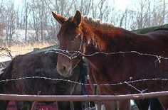Farmer charged with animal cruelty still not feeding horses