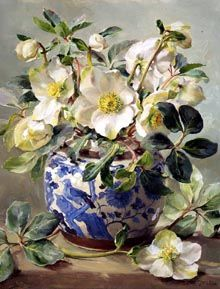 White hellebores arranged in a blue and white chinese vase. vase White Hellebores in a Chinese Vase - Blank Card Art Floral, Flower Of Life, Flower Art, Christmas Rose, Still Life Art, Botanical Art, Beautiful Paintings, Beautiful Flowers, Art Gallery