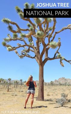 Have you ever wished that the whimsical destinations dreamed up by Dr. Seuss were real, and you could visit them yourself? At Joshua Tree National Park, you kind of can.
