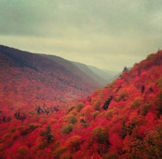 Landscape Photograph, travel photo, bright colors, nature, autumn, red decor, ombre, woodland, blood orange, cabin decor, for him, fPOE. $30.00, via Etsy.