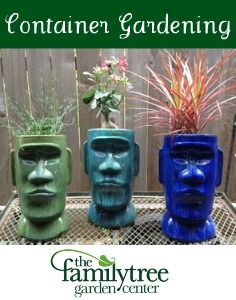Container Gardening: Portable Prettiness | The Family Tree Garden Center