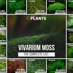 Complete List Of Vivarium Moss & Care Guide Tips - Modern Reptile Terrarium, Moss Terrarium, Terrarium Plants, Build A Terrarium, Succulent Planters, Hanging Planters, Succulents Garden, Water Garden, Garden Plants