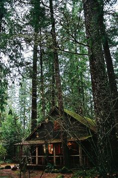 Cozy cabin the woods