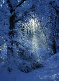 Snow Blue Forest in Winter Winter Szenen, Winter Magic, Winter Christmas, Winter Blue, Magical Christmas, Winter Sunset, Blue Christmas, Blue Forest, Snowy Forest