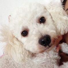 Fareja Pet | Amor, carinho. saúde e qualidade de vida para os Pets