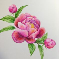 Now what to do with this??? I really want to try to add shade to the entire image in gray or light blue, but have no courage to do that and to ruin my three-hour-work. #peony #thetonstamps #watercolor #zigcleancolorrealbrush #papercraft #TheTon