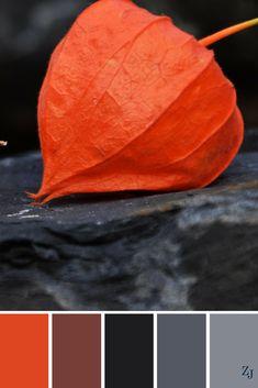 ZJ Colour Palette 325 #colourpalette #colourinspiration