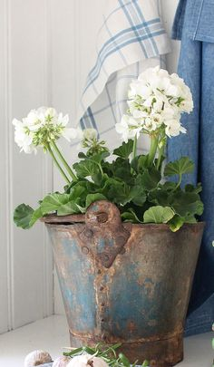Geraniums and fabulous old bucket