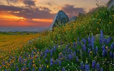 Find out: Sunset Flower Scenery wallpaper on  http://hdpicorner.com/sunset-flower-scenery/