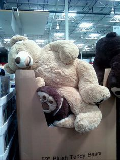 Costco giant teddy bear! We are bringing one home on Saturday! I'm so excited!