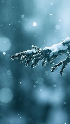 Winter Season Snow Trees Lens Flare iPhone Wallpapers