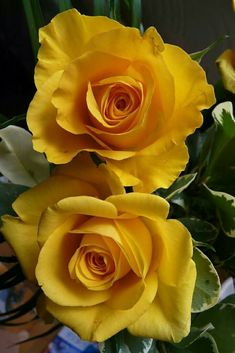 Pics rose shared by Lucia Paiva on We Heart It Beautiful Rose Flowers, Beautiful Flowers Wallpapers, Exotic Flowers, Amazing Flowers, Pretty Flowers, Rosa Rose, Good Morning Flowers, Coming Up Roses, Arte Floral