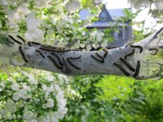 Homestead Acres: How To Get Rid Of Tent Caterpillars
