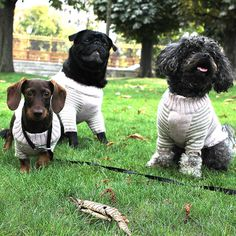 Dog Sweaters, Hero, Heavens, Dogs, Animals, Street Style, Models, Happy, Design