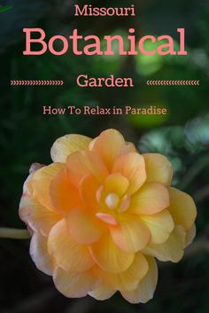Missouri Botanical Garden – How to Relax in Paradise