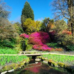 The very colourful Wakehurst Gardens in Spring.. #wakehurstplace #nature #gardens #flowers #pink #pinkflowers #nationaltrust #seasonal #spring #landscape #mansion #historic #history #architecture #countryside #colourful #sunny #beautyspot #scenic #england #beautiful #contrast #sussex