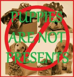 Puppies are not presents..that can be discarded. You are making a commitment to care for them for LIFE!!